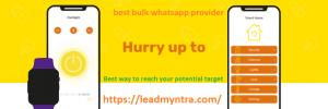 best bulk whatsapp provider
